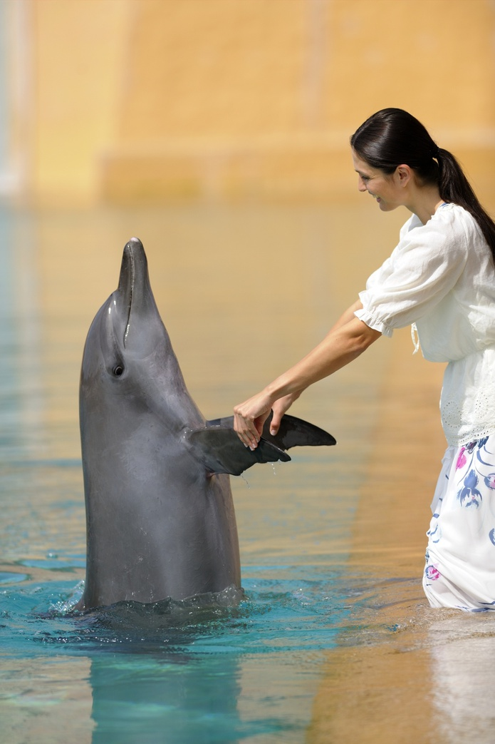 holding hands with a dolphin
