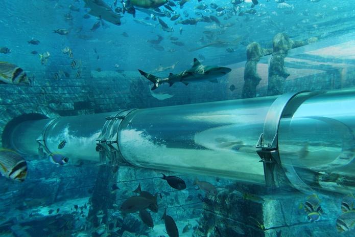 Dubai Atlantis Aquaventure Waterpark Shark Filled Pool
