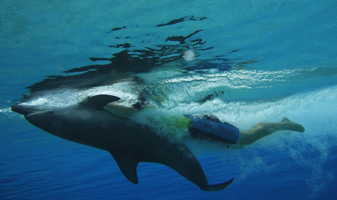 Dolphin Interaction Belly ride