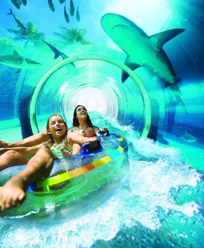 Shark Lagoon